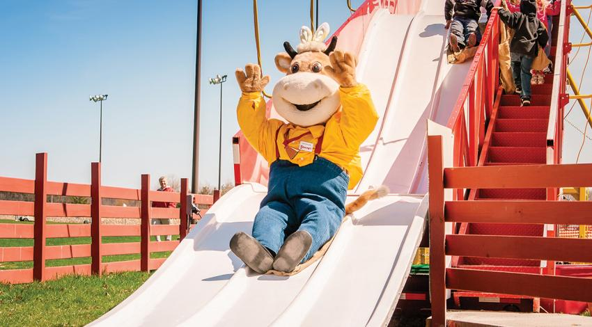Young's Jersey Dairy mascot slides down a slide.