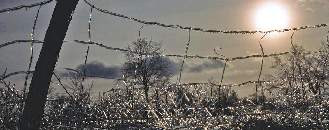 Ice covered fence