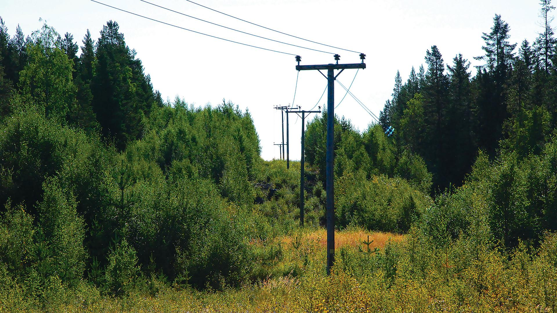 Power lines through a forest (Credit: Getty Images)